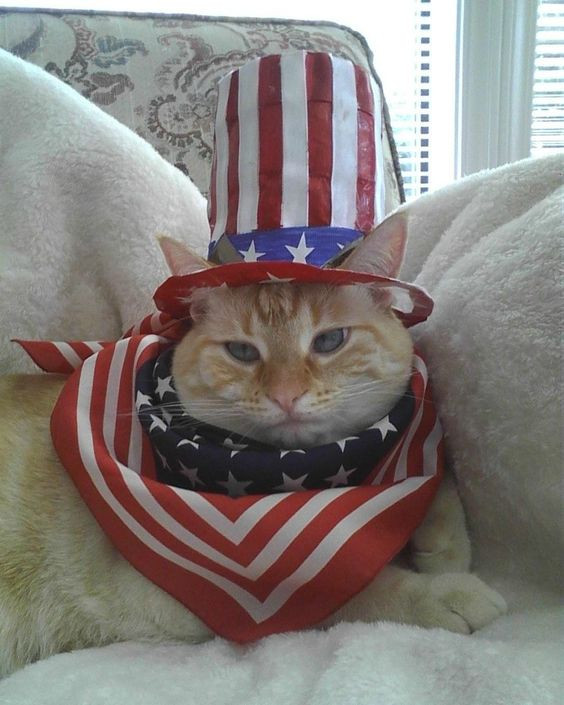 July4kittyphoto