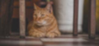 animal-animal-photography-blur-978816.jp