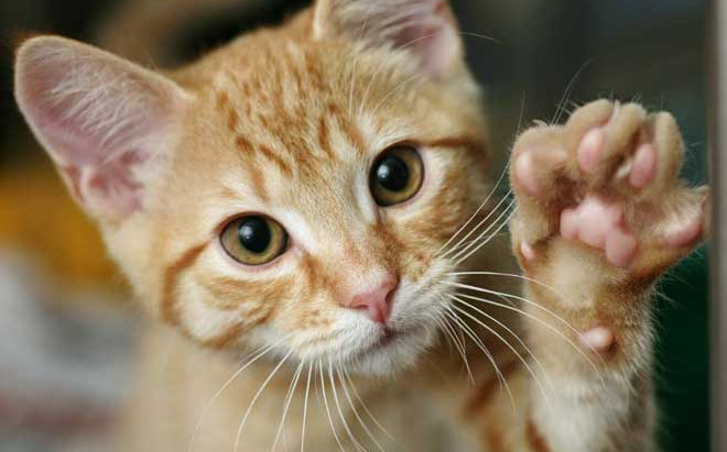 Scratch the Surface:  Why Cats Scratch and What To Do About It