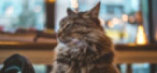 animal-animal-photography-cat-870827.jpg