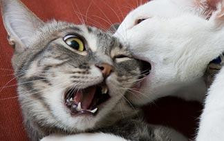 5-tips-to-stop-cats-from-fighting0