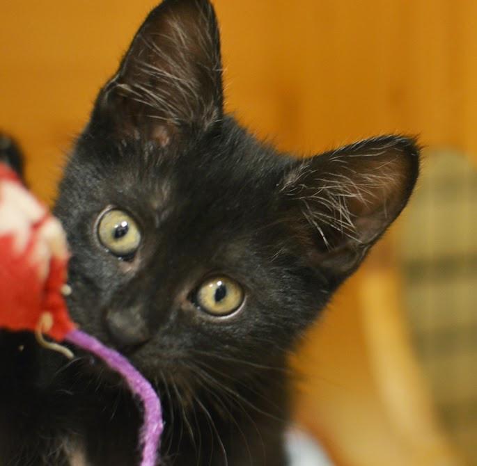 Look at that face! Meet Zipper!