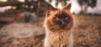 adorable-animal-animal-photography-78486