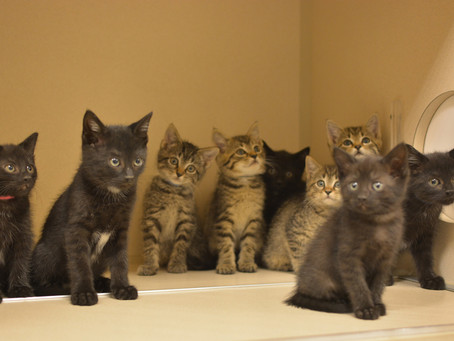 Ten Tiny Kittens from Tennessee…