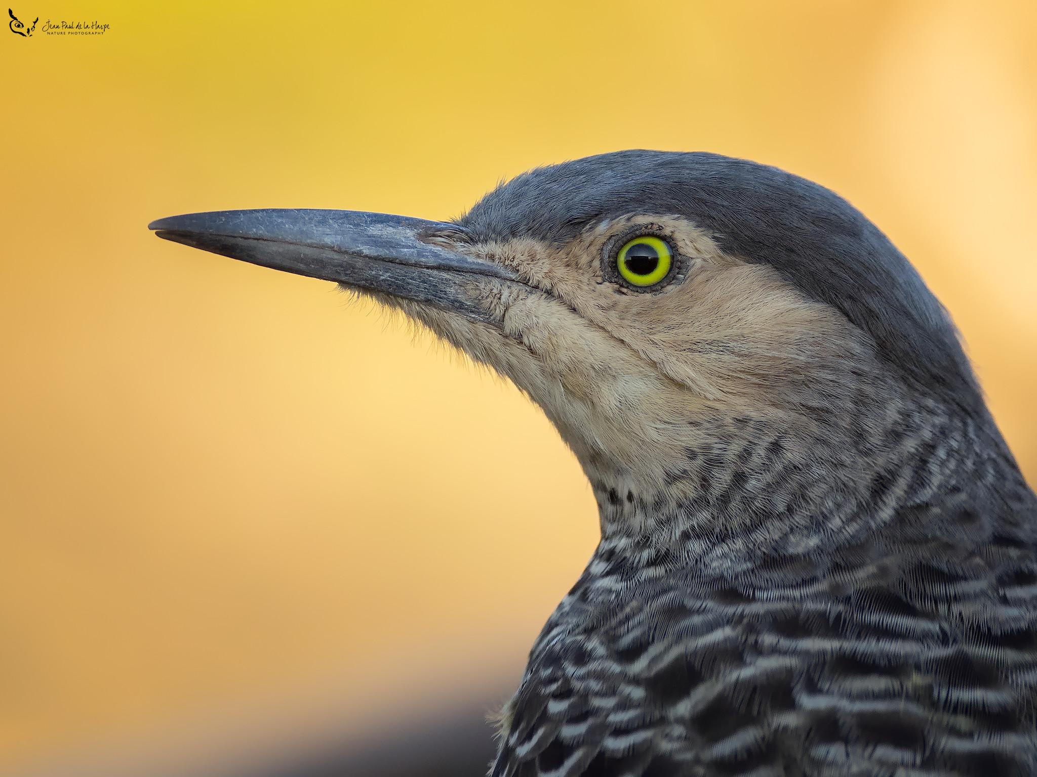 Curso de Fotografía de Aves