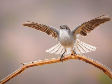 Sony A1 para fotografía de Aves