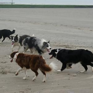 Amusement hondjes