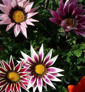 奄美大島の花々