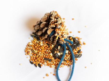 Make a pinecone bird feeder