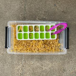 pasta shape sorting exploration