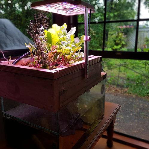 Custom Aquarium Conversions