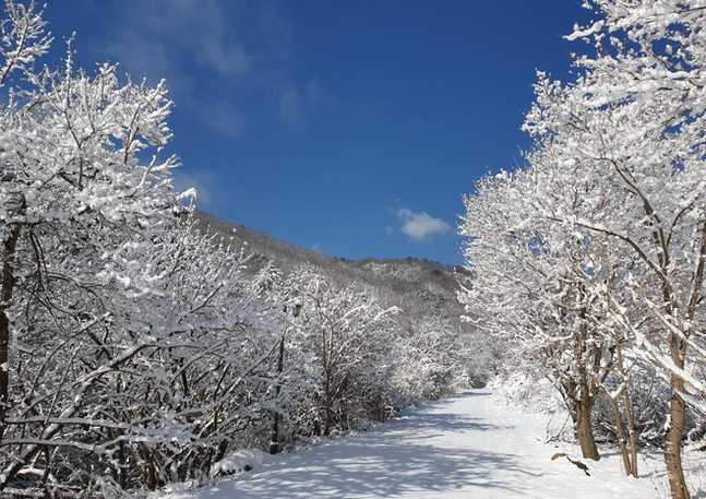winter_03.jpeg