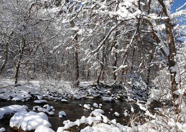 winter_04.jpeg