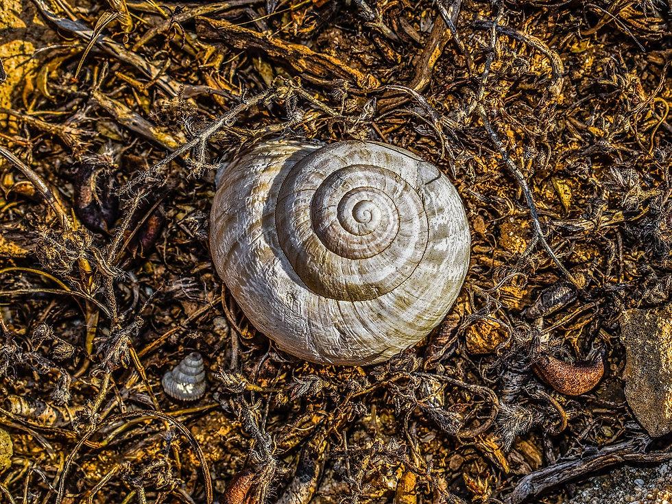 shell-2628471_1280.jpg