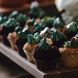Succulent cupcakes to celebrate the love