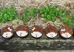 And some sweet little hedgehog nutella cupcakes #hedgehogcupcakes #hedgehog #cutecupcakes #cakesbyhe