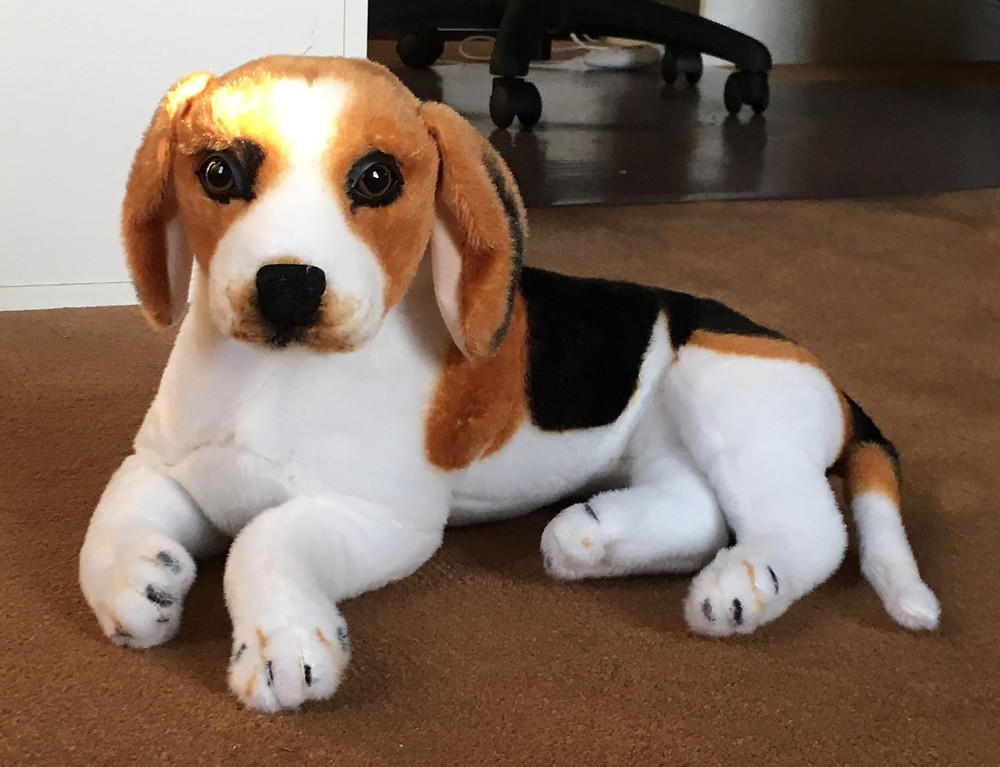 Name our new museum friend - the hound! Help name him at the Lippitt House Museum Dec 16