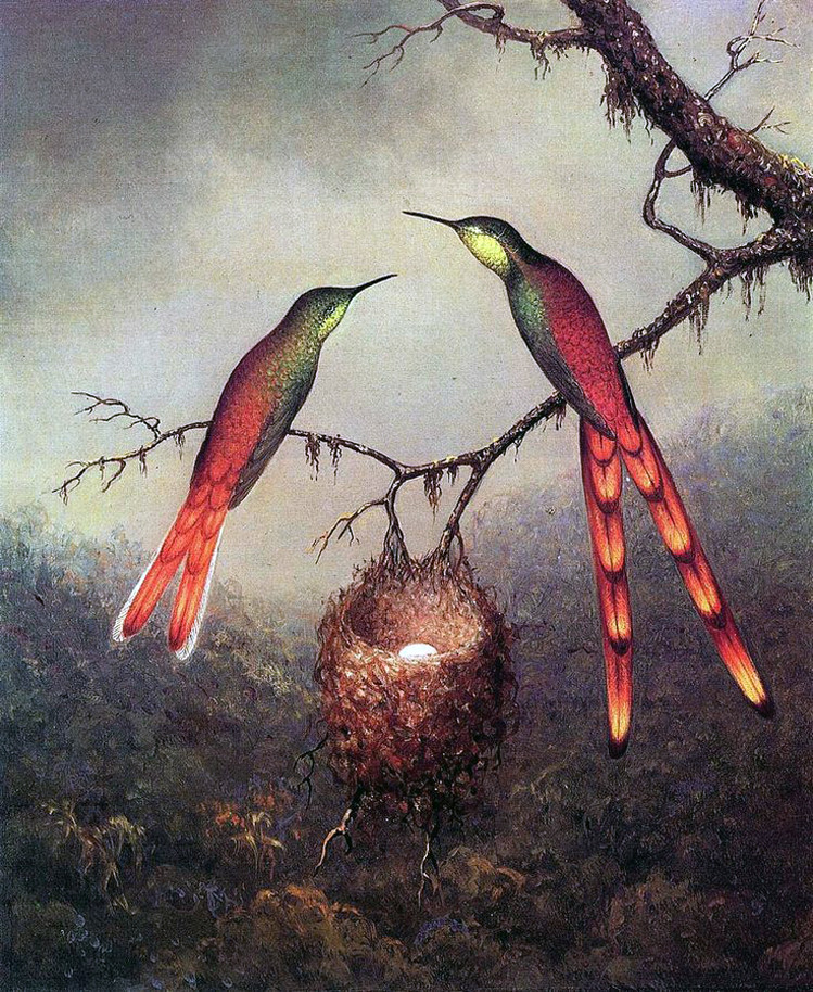 Two Hummingbirds Guarding an Egg, Martin Johnson Heade