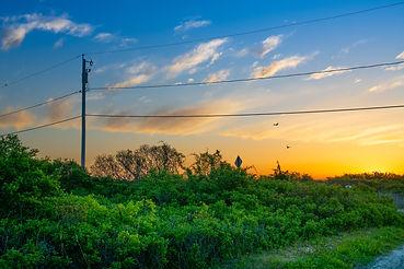 Third Beach Sunset Birds.jpg