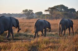 Game Rangers International elephant