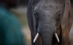 GRI-elephant-orphanage