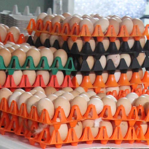 Wholesale Farm Fresh Eggs (Washed)