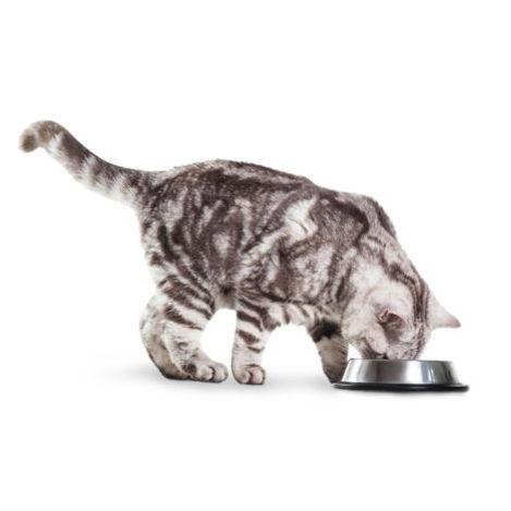 cat eat  3.jpg