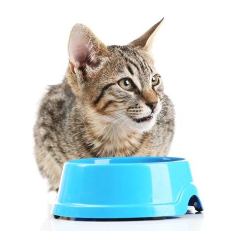 cat bowl.jpg