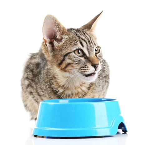 cat eat  2.jpg