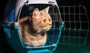 cat travel.jpg