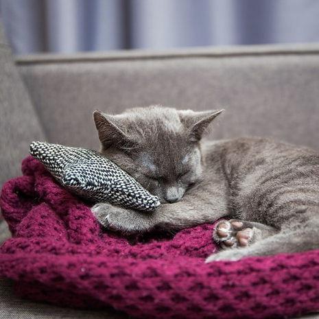 cat blanket.jpg