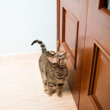 cat door.jpg