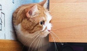 cat lifestyle.jpg