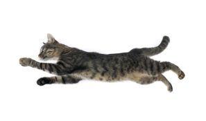 cat run.jpg