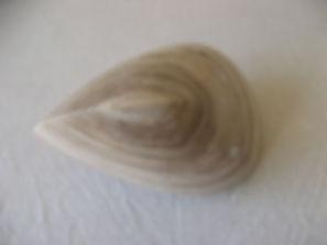 Oloid aus Palisandro-Marmor