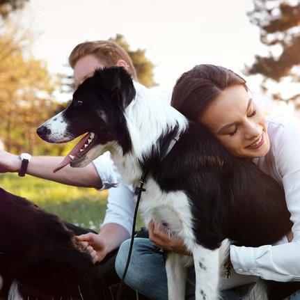 What makes Pet Preferred Diagnostics Different?