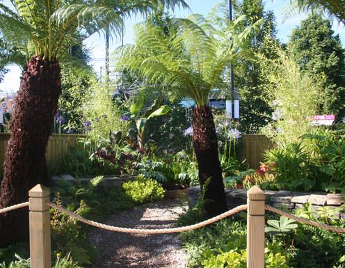 Tree ferns add structure