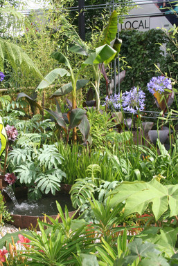 Bold foliage adds a tropical feel to the garden