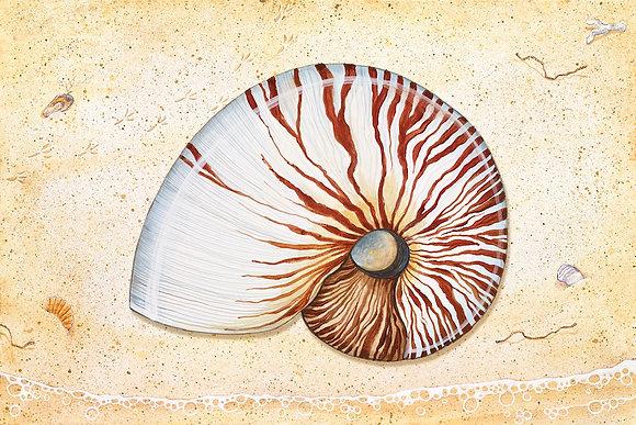 """""""Nautilus"""" © Floor Mat"""