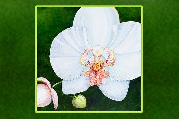 """""""Phalaenopsis"""" © Floor Mat"""