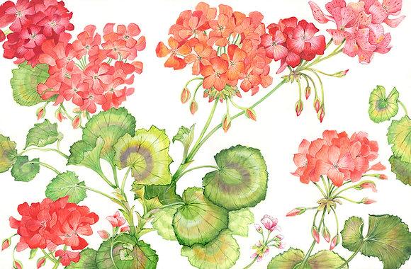 """""""Geraniums"""" © Floor Mat"""