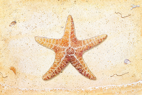 """Star Fish"" © Floor Mat"