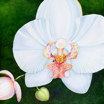 """Phalaenopsis"" © Square Glass Cutting Board"