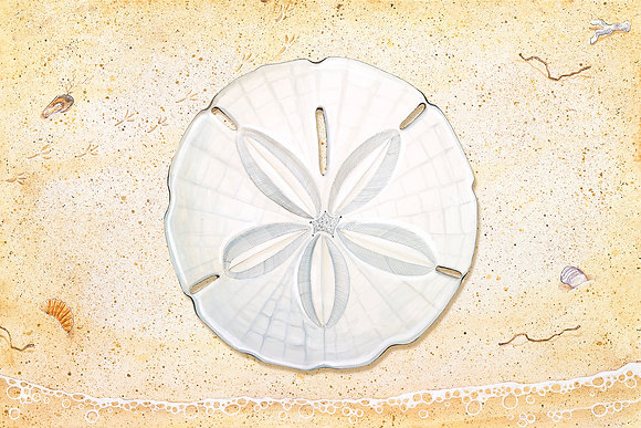 """Sand Dollar"" © Floor Mat"