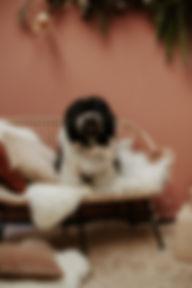 LEONNEPHOTOGRAPHY-KERSTSHOOT(64van104).j