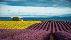 2048x1152-px-field-France-lavender-Prove