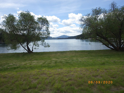 shoreline with 2 trees.JPG