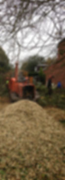 Professional tree services for Birmingham, Solihull and surrounding areas.