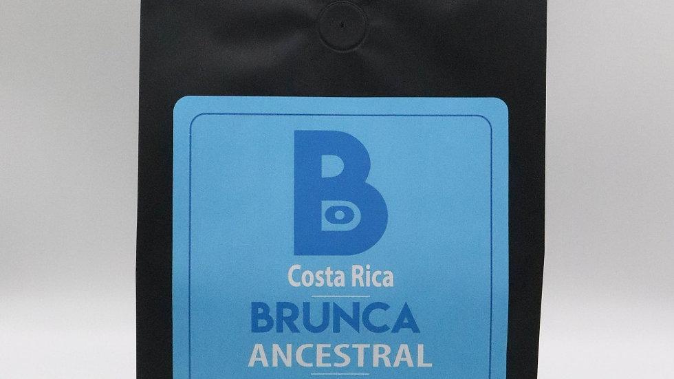 5 lb Brunca Ancestral Coffee - Wholesale