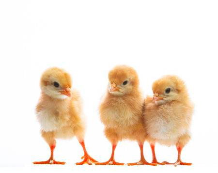 Chick Hunt
